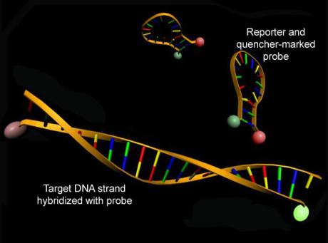 molecular_beacons